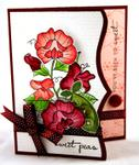 Erin Lincoln - Year of Flowers: Sweet Peas