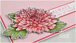 Pink Mums detail
