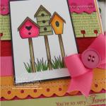 Debbie Olson - Bird Watching and Additions